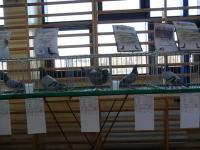 Wystawa Okręgu  PZHGP Tarnobrzeg